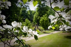East End Flowering Tree
